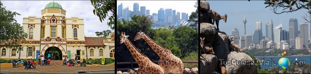 el zoo de sidney