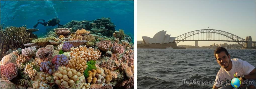 No te pierdas Sidney y la Gran Barrera de Coral